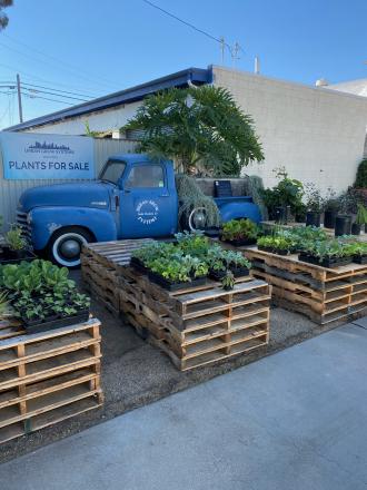 Plant a garden today!